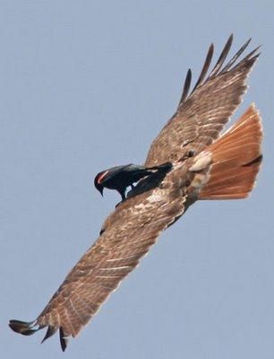 funny-animals-hitching-bird
